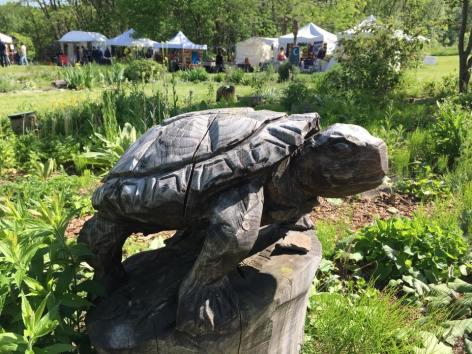 Tortoise at Festival time 2017 AD.jpg
